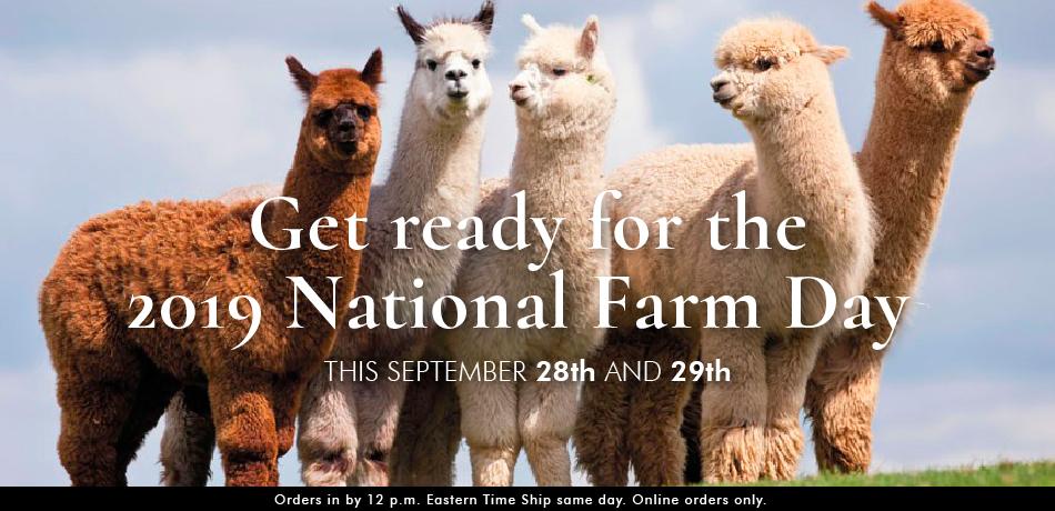Alpaca Farm Day