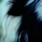 Panda PREMIUM Baby Alpaca Fur - Classic Ornament 10 inches
