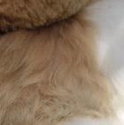 Various BABY Alpaca Fur-Peruvian Ornament 6 inches