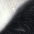 Black-White PREMIUM Baby Alpaca Fur - Classic Ornament 13 inches