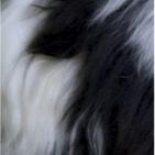 Panda PREMIUM Baby Alpaca Fur - Classic Ornament 13 inches