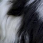 "Panda PREMIUM Baby Suri Alpaca Fur - Teddy Bear 10"""
