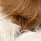 "Various PREMIUM Baby Suri Alpaca Fur - Teddy Bear 10"""