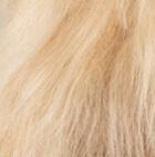 "Various Baby Alpaca Suri Fur- Standing Alpaca 12"""
