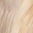 "Various Baby Alpaca Suri Fur- Standing Alpaca 8"""