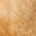"Various Baby Alpaca Fur-Cartoon Alpaca 11"""