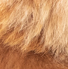 """Various Baby Alpaca Fur - Paquita Alpaca 16"""""""