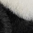 """Panda Baby Alpaca Fur - Panda Bear Ornament 11"""""""