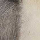 "Grey-White Baby Alpaca Fur - Penguin Ornament 13"""