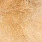 "Various Baby Alpaca Fur - Duck Ornament 14"""