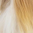Various Baby Alpaca Suri Fur - Standing Alpaca 10''
